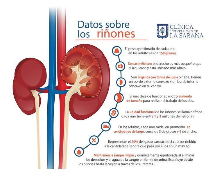Cuida tus riñones